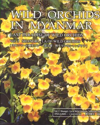 Wild Orchids In Myanmar Last Paradise Of Wild Orchids Opentrolley
